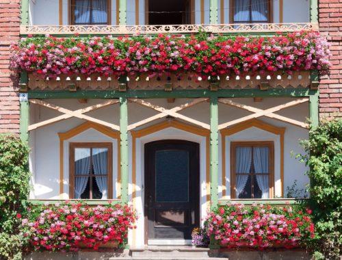 balkon latem - kwiaty