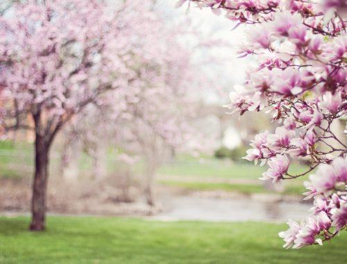 wiosna - drzewa